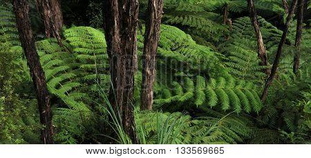 Scene in the Abel Tasman National Park New Zealand. Green fern.