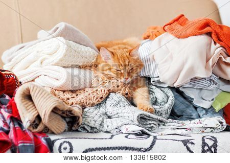 Cute ginger cat sleeps on a pile of knitted clothes. Warm knitted sweaters and scarfs are folded in heaps. Fluffy pet is dozing among cardigans. Cozy home background.
