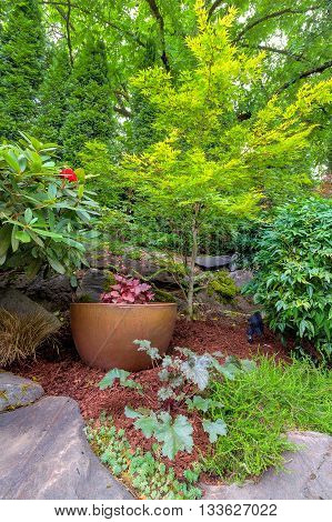 Garden Backyard with gold pot container in landscaped yard with plants shrubs and trees