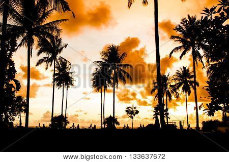 Silhouette palm tree at colorful sky sunset