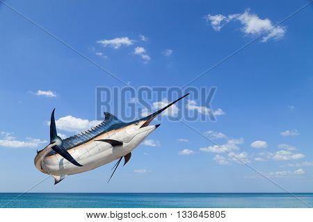 Marlin - SwordfishSailfish saltwater fish (Istiophorus) isolated on sea and sky background