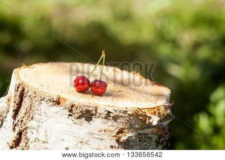 Closeup of the Cherry on a stump