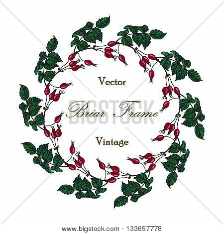 Vector round frame with the briar brier . Vector colored red green eglantine frame. Vintage template card. Save the date vector circular illustration.
