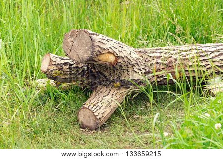 A tree without branches is (fell) on the green grass. All the branches sawn off.