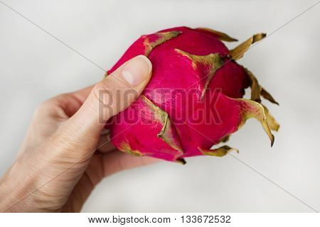 Woman`s hand holding exotic dragon fruit (Hylocereus monacanthus Pitahaya Pitaya) isolated on grey textured background. Bright red violet skinned fruit with violet flesh. Artistic retouching. poster