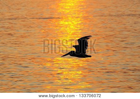 Silhouetted Pelican At Sunrise In Paracas National Reserve, Peru