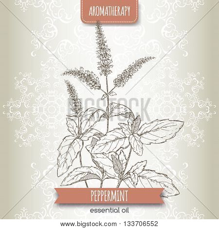 Mentha piperita aka peppermint sketch on elegant lace background. Aromatherapy series. Great for traditional medicine, perfume design or gardening. poster