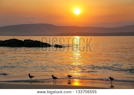 Sunrise At La Mina Beach With Silhouetted Sandpipers, Paracas National Reserve, Peru