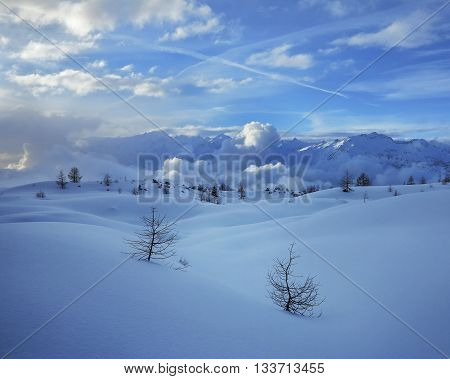 Two winter lonely snowy fir trees on mountainside blue sky background