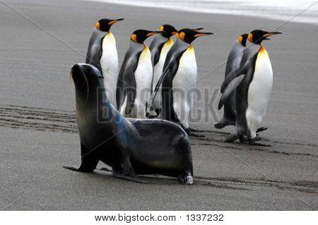 Penguinsseals