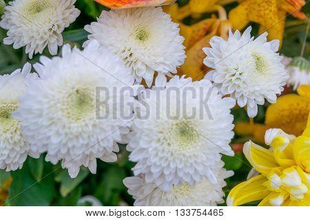 Flower White Color