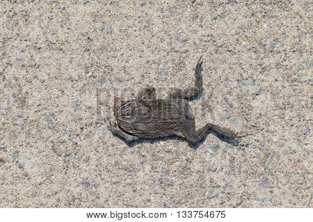 Dead Toad On The Road