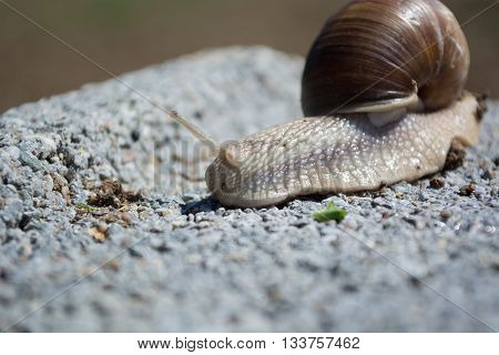 Snail On Concrete Block