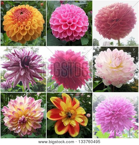 Flowers collage muti color - beautiful nature