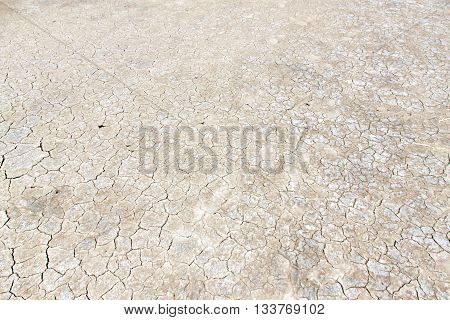 Mangrove forest in parched land nature ground full of salt on the skin
