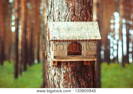 Birdhouse in the woods in the summer on a tree, a pine on a background of green grass.