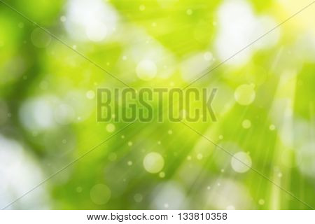 Blurry green color and srunny lighing for background. Green nature for background