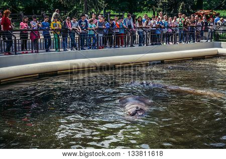 Warsaw Poland - May 12 2015. Kids looks at common hippopotamus in Warsaw Zoological Garden