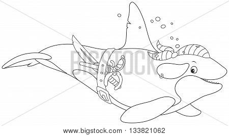 orca swimming with a bandana, a pirate saber and a pistol