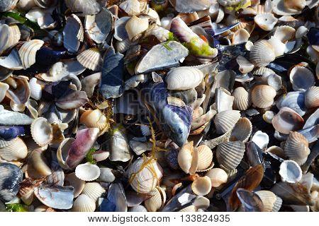 Shells Sand Beach Seacoast Summertime 4