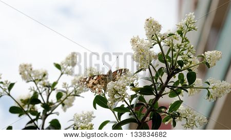 Butterfly sitting on lilac during the sunny day