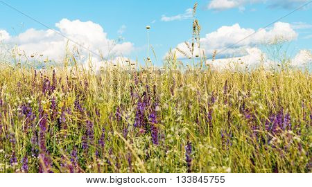 blossoming flowers on a meadow in summer