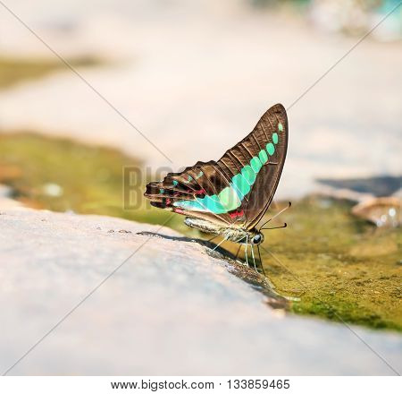 common bluebottle butterfly closeup,beautiful butterfly in nature, outdoor