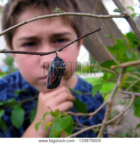 Boy outdoors looking at cocoon or chrysalis on branch with curious, thoughtful expression.