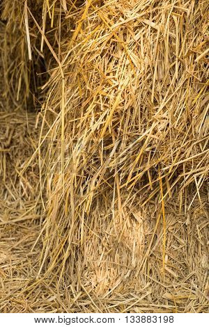 Dry yellow hay agriculture closeup texture Background