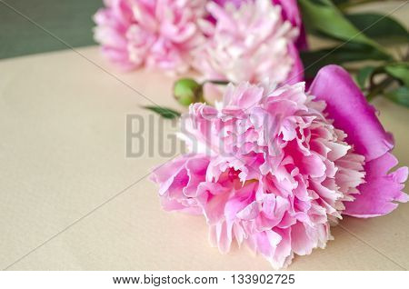 Background with pink peonies. Floral background. Floral composition with peony flowers. Can be used as a background for postcard or invitation cards.