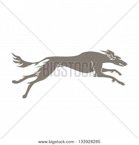 Vector silhouette of running dog saluki breed