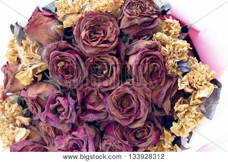 love roses wilt dry abstract background .