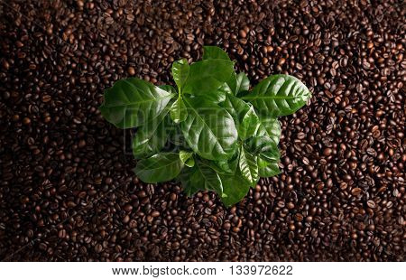 Bunch Of Coffee Beans On The Rust Background With Coffee Plant.