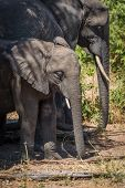 Young elephant standing in shade beside family poster