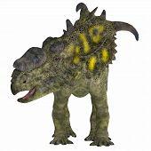 Pachyrhinosaurus Dinosaur on White 3D Illustration - Pachyrhinosaurus was a ceratopsian herbivorous dinosaur that lived in the Cretaceous Period of Alberta Canada. poster