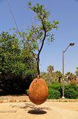 Hovering orange tree in old Jaffa, symbolizing prosperity of Israel. poster