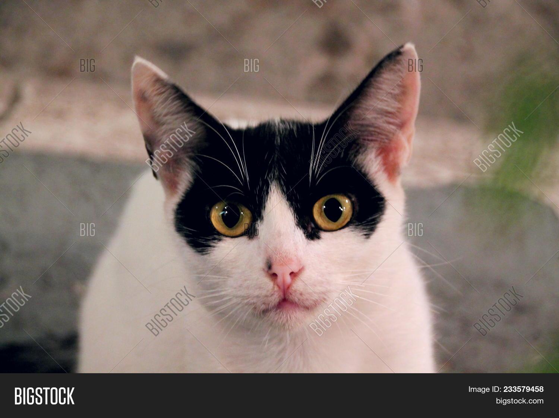 Wonderbaarlijk Young Crazy Surprised Image & Photo (Free Trial) | Bigstock TM-08