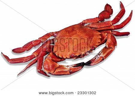 Wonderful crustacean Red Cooked Crab