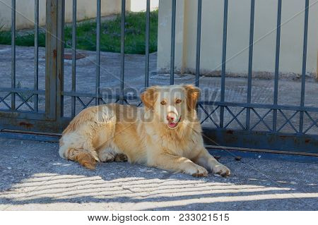 Cute Sad Stray Dog Is Lying On The Street. Concept - Abandoned Homeless Animals.