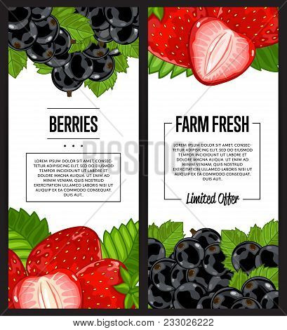 Organic Farm Flyer With Strawberry And Black Currant Vector Illustration. Natural Juicy Fruit Poster
