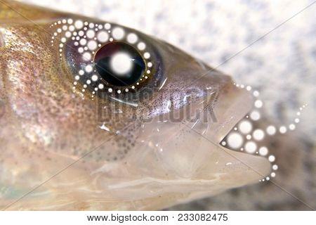 Fish Head Patterns Light Energy Prana The Phenomenon Of Shamanic Magic