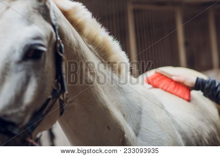 The White Horse Looks Directly Into The Camera. Horse Close-up. A Funny Portrait Of A Horse. Funny H