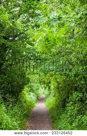 Trees and bushes along straight pathway forming a tunnel in Southern England