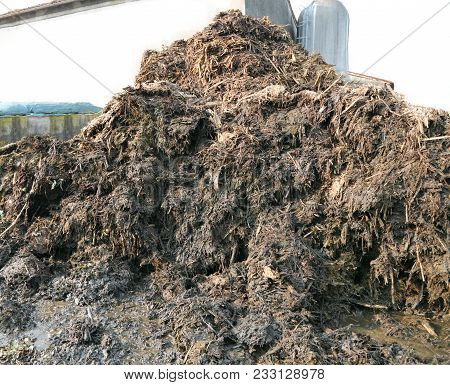 Big Heap Of Smelly Manure To Spread On The Field To Make It Very Fertile