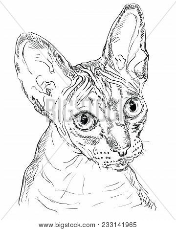 Vector Outline Monochrome Portrait Of Hairless Curious Sphynx Сat In Black Color. Hand Drawing Illus