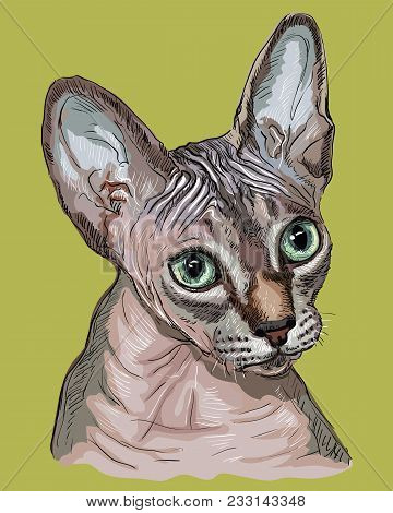 Vector Outline Colorful Portrait Of Hairless Curious Colorful Sphynx Cat In Pink And Grey Colors. Ha
