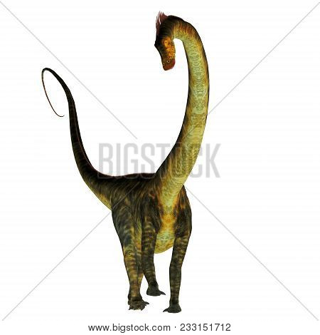Barosaurus Dinosaur On White 3d Illustration - Barosaurus Was A Herbivorous Sauropod Dinosaur That L