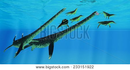Styxosaurus Attacks Dolichorhynchops 3d Illustration - A Group Of Dolichorhynchops Plesiosaurs Scatt