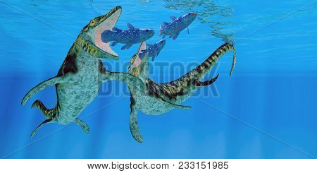 Tylosaurus Marine Reptiles 3d Illustration - Coelacanth Fish Become Prey To A Pair Of Tylosaurus Mar