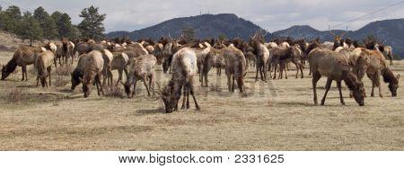 In Front Of The Herd